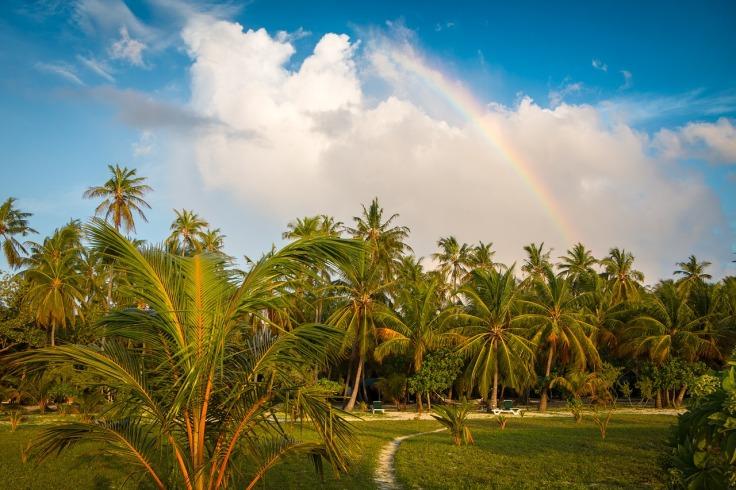 Arc-en-ciel au-dessus de palmiers à l'île Meeru aux Maldives