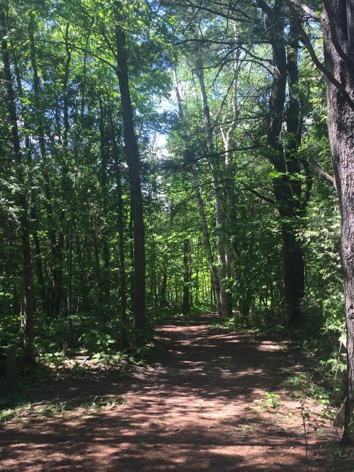 Sentier dans la forêt à Rigaud