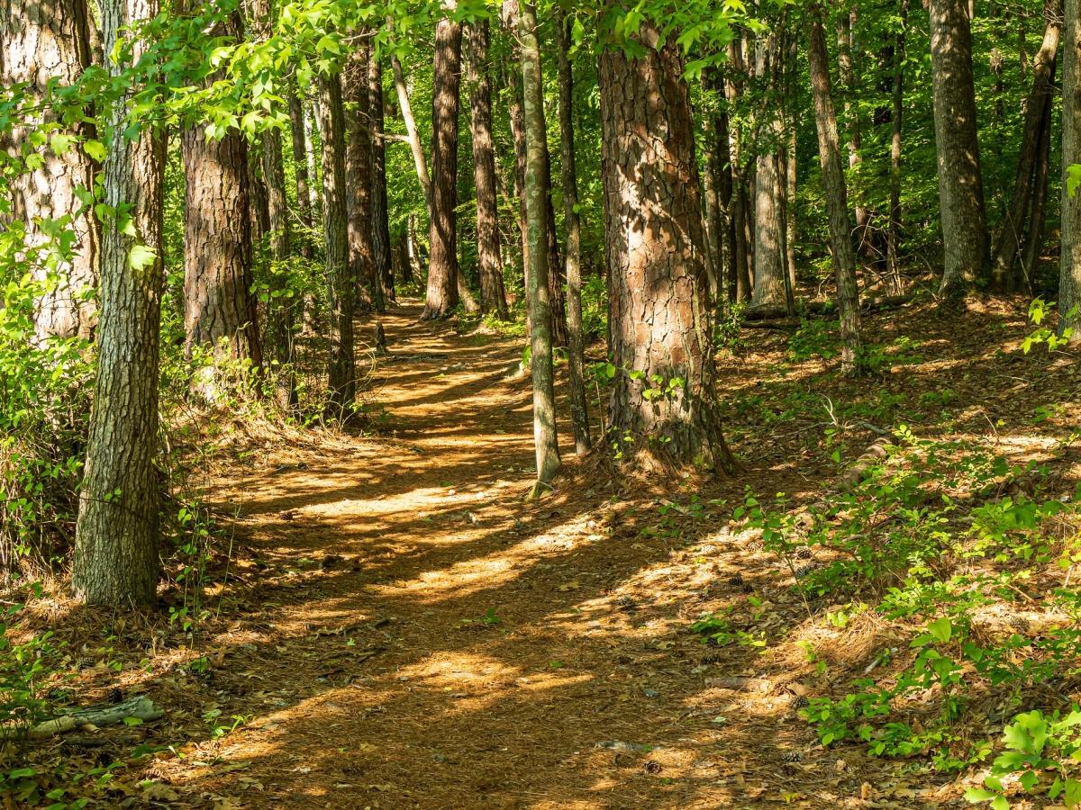Arbres matures, sentier de terre et feuillage