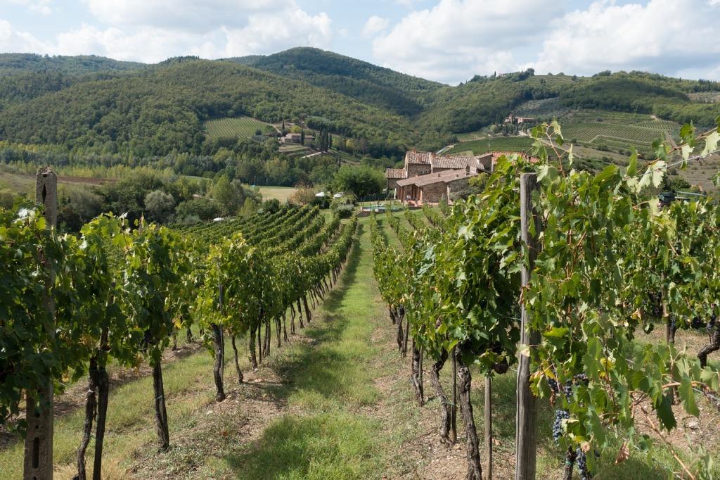 Rangées de vignes au feuillage vert entourées de montagnes et d'une maison