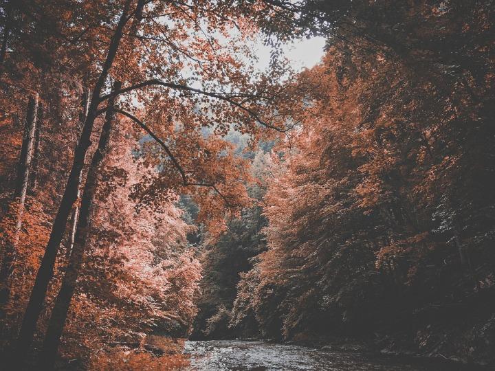 arbres et rivière en automne rouge et jaune