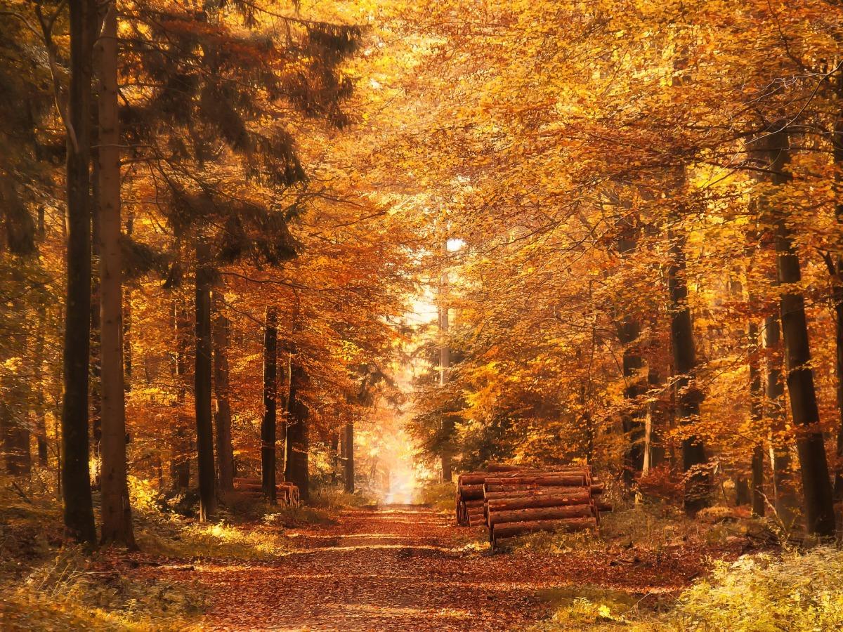 faire une balade d'automne