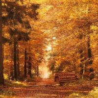 Où faire une balade d'automne près de Montréal: 5 suggestions hors des sentiers battus