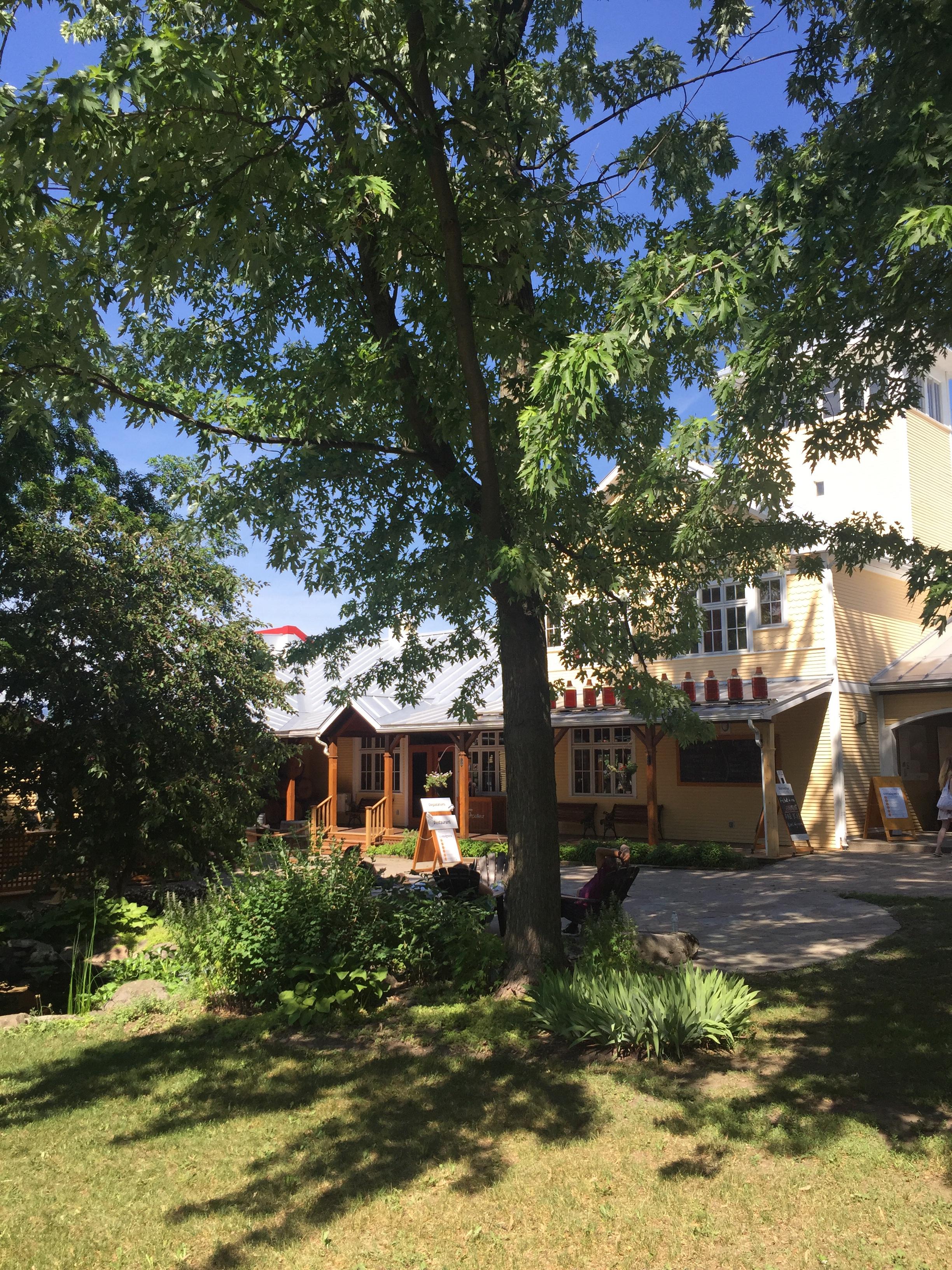 grand arbre feuillu et maison jaune à la campagne