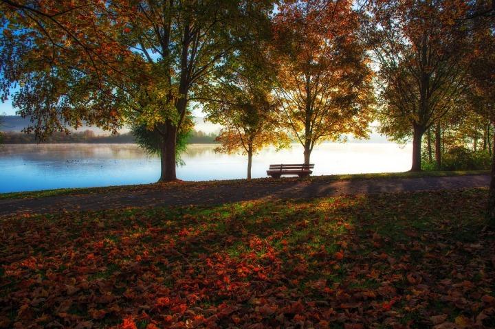 Banc sur le bord d'un lac en automne feuilles jaunes oranges et rouges