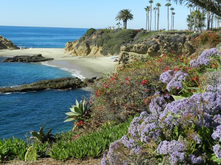 fleurs, plamiers, plage, océan
