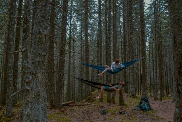 deux-hamac-superposés-dans-une-forêt-de-pins