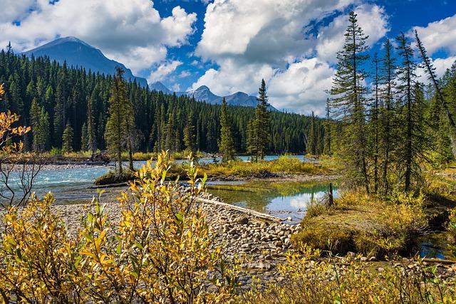 forêts-de-sapin-et-lac-en-alberta