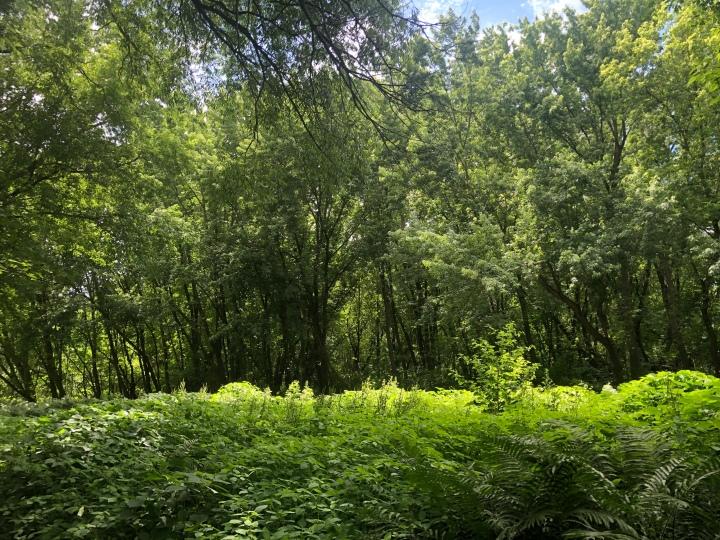 forêt-luxuriante-arbres-et-fougères-verts
