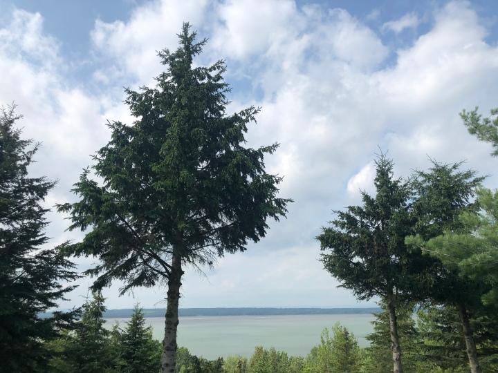 vue-sur-le-fleuve-et-arbres