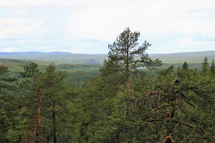 Voyage en Finlande: Visiter la Laponie enété